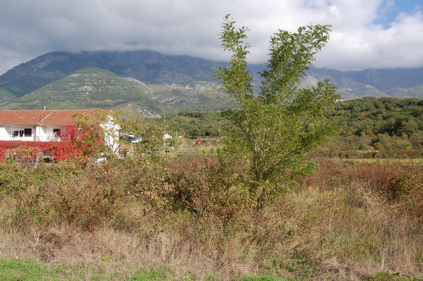 Land in Radanovici